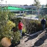 Viveros Aparecida dona 200 plantas